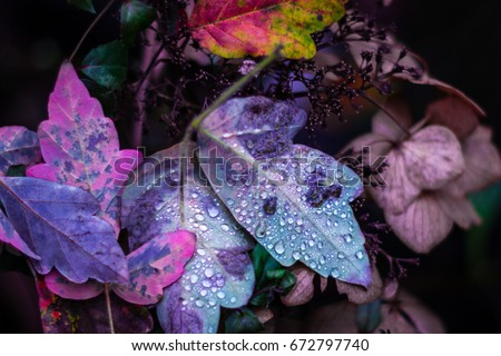 Colorful Fall Leaves #672797740