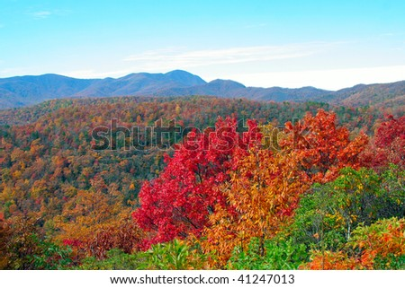 colorful fall leaves in the mountains