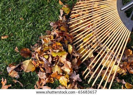 Colorful Fall leaves with wooden rake.
