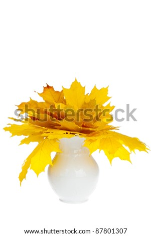 Colorful fall maple leaves isolated on white