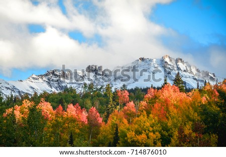 Colorful fall morning of the aspen with write snow over  the rocky mountains, Colorado, USA.