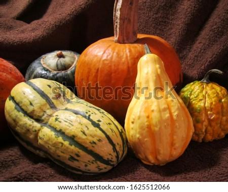 Colorful Fall Squash Still Life