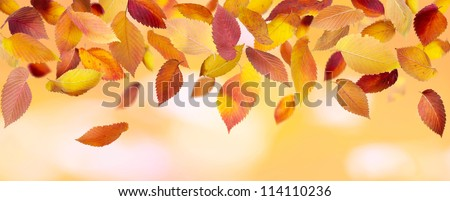 Colorful falling leaves on autumn background