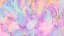 Colorful feather background, isolated on white. Copy space.