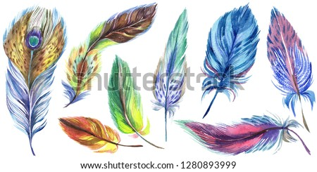 Colorful feathers. Watercolor bird feather from wing isolated. Aquarelle feather for background, texture, wrapper pattern, frame or border. Isolated feather illustration element.