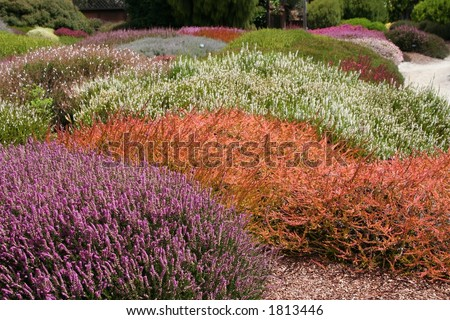 colorful field of heather