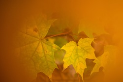 Colorful fiery autumn leaves patterns