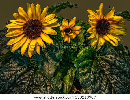Colorful fine art floral surreal fantasy closeup of a sunflower trio in surrealistic / fantastic realism vintage painting style #530218909