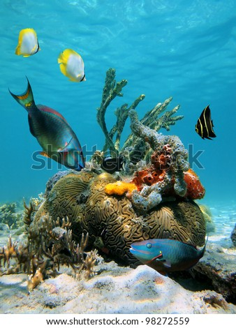Colorful fish and tropical marine life in the Caribbean sea - stock photo