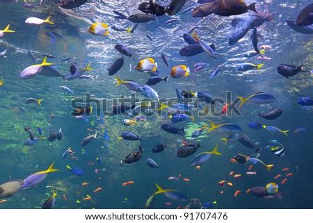 Colorful fish in a large aquarium