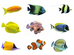 colorful fish isolated,multicolor fish background