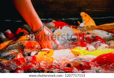 Colorful fish or carp or fancy carp, Fancy carp swimming at pond. #1207717153