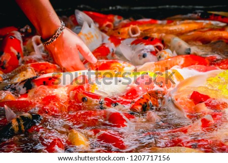 Colorful fish or carp or fancy carp, Fancy carp swimming at pond. #1207717156