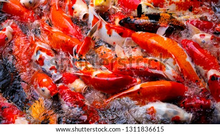 Colorful fish or carp or fancy carp, Fancy carp swimming at pond #1311836615