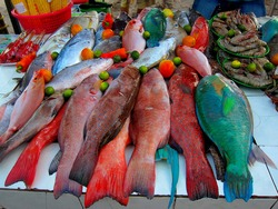 Colorful fish sold at fish markets in the Philippines