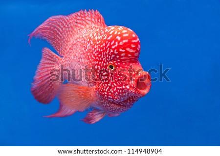 Water Fish Names Colorful Fish Swim Under Water