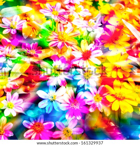 colorful flower.