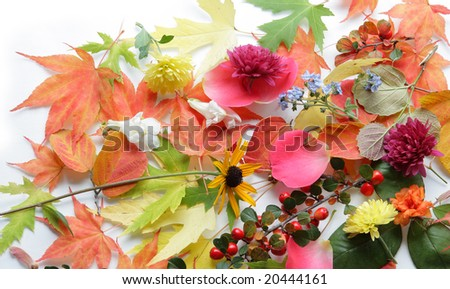 colorful flower and leaves for botanical background