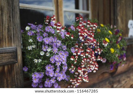 Colorful Flower Arragement on the windows of an Alpine Cabin in Austria