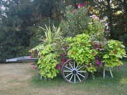 Colorful flower bed with luxuriant blooming plants in form of farm wagon in park. Dray cart transformed with bright red and violet flowers and green leaves in elegant flower bed in rural style