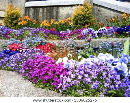 colorful flower bush in botany garden  #1506825275