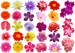 colorful flower isolated collection set with clipping path