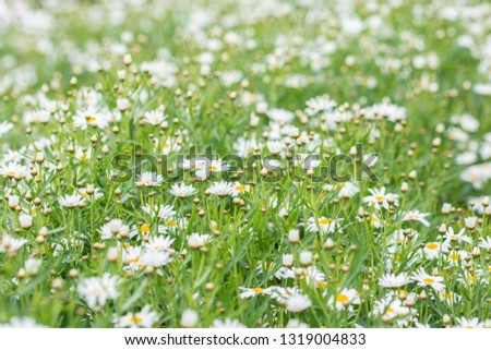 Colorful flower macro #1319004833