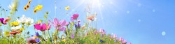 Colorful flower meadow with sunbeams and bokeh lights in summer - nature background banner with copy space
