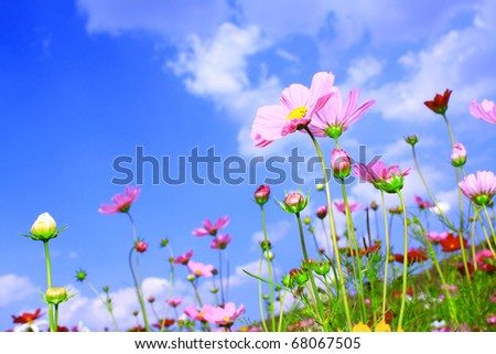 Colorful Flower on Beautiful Blue Sky