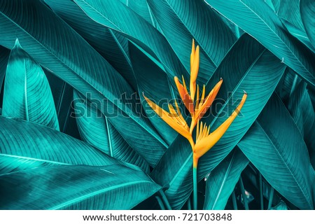 Photo of colorful flower on dark tropical foliage nature background