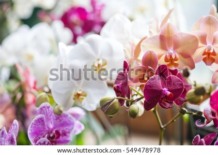 colorful flower orchids....