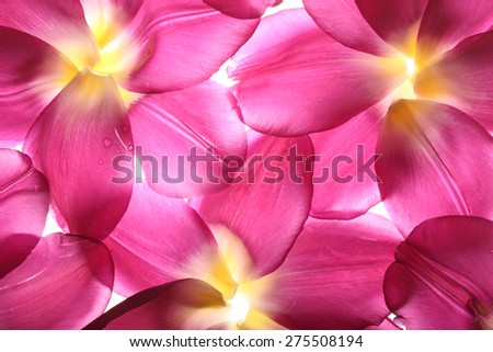 colorful flower petals