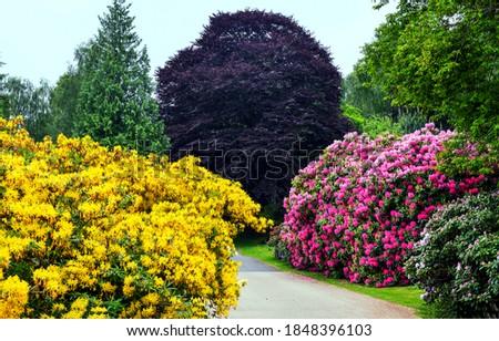Colorful flowering bushes in garden. Garden blooming flowers. Flower garden in bloom. Bush flowers in garden bloom