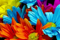 Colorful flowers against a black background in a studio environment