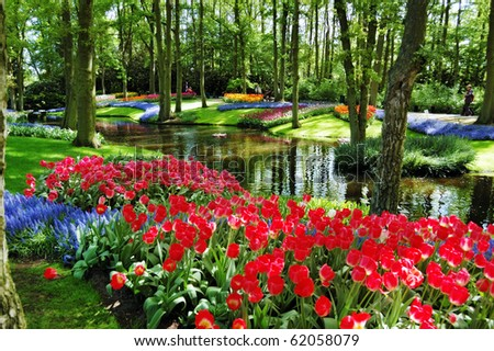 Colorful flowers and blossom in dutch spring garden Keukenhof (Lisse, Netherlands) - stock photo