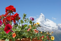 Colorful flowers and Mt. Matterhorn in the background