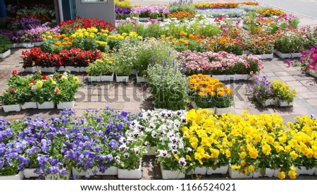 Colorful flowers and plants at a flower shop #1166524021