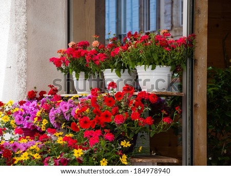 Colorful flowers at the entry to the flower shop in Provence. Reflection of the typical house with blue shutters in the window of the shop.