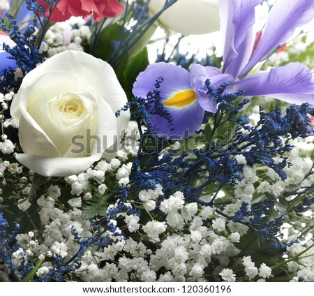 Colorful Flowers ,Close Up For Background
