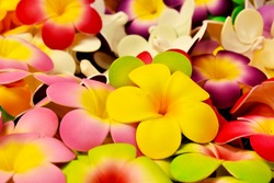 Colorful flowers, colorful flowers can be used as a perfect background image