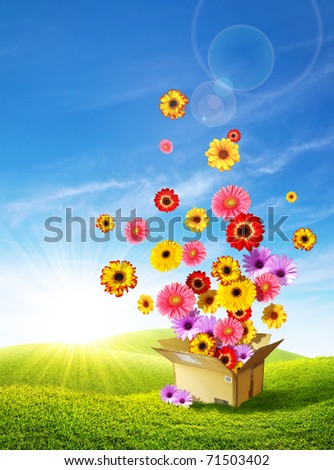 Colorful flowers emerging from a cardboard box delivering spring over the green hills