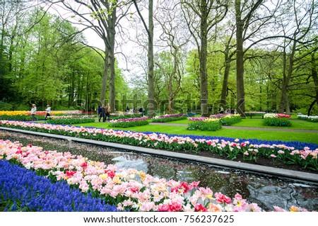 Colorful flowers grow in Keukenhof Garden in the Netherlands - Shutterstock ID 756237625