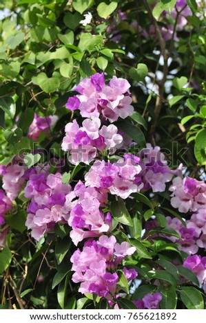 Colorful flowers in nature. Beautiful violet and pink flowers With branches and green leaves. #765621892