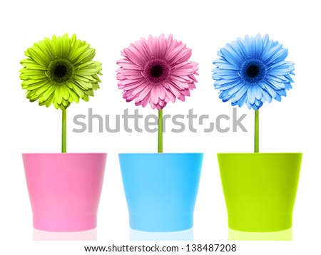 Colorful flowers in pots.