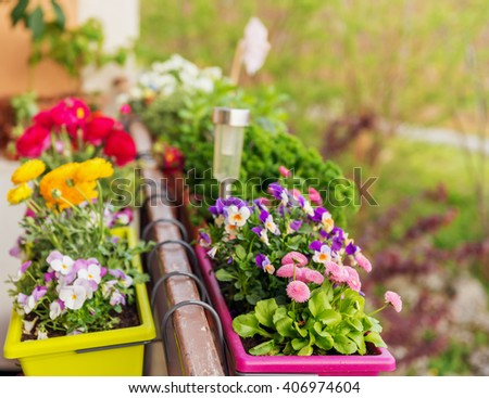 Colorful flowers in pots on the balcony #406974604