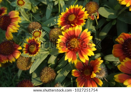 colorful flowers in the garden  #1027251754