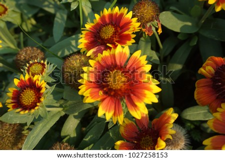 colorful flowers in the garden #1027258153