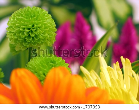 Colorful flowers including a chrysanthemum and gerbera. Shallow dof, macro. - stock photo