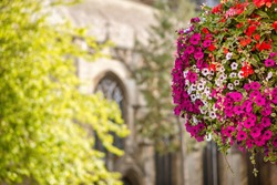 Colorful flowers on the Station Road in Harrow, England. Saint John's Church in the background