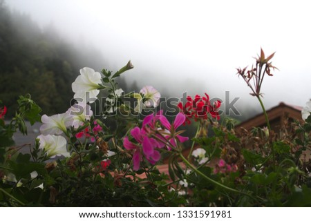 Colorful flowers with a misty background #1331591981